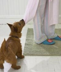 Health Clues in Your Dog's Behavior