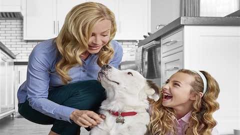 Pets | Healthier, Happier Life for Your Pet