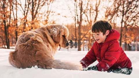 Pets | Help Pets Ward Off Winter Risks