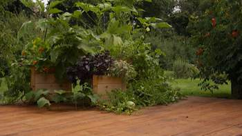 Gardening - Planting a variety of vegetables will provide different leaf textures in deck planters, similar to those of a flower garden