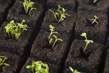 Gardening - Jumpstarting the Garden. Planting seeds indoors in containers is an inexpensive way to broaden the range of vegetables you can grow in your garden.