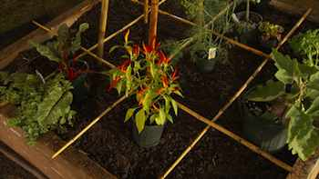 A 4-foot by 4-foot raised-bed garden can be put together with wide boards, simple hardware and good soil. With adequate sunshine and careful tending, this mini garden can keep you in fresh produce all summer long