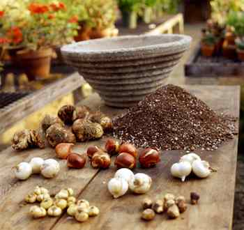 Bulbs of different flowers can be planted in the same container. Layer them in potting soil mixed with grit, sand or gravel. Arrange larger bulbs in the lowest layer and smaller ones on top or around the edges of the pot