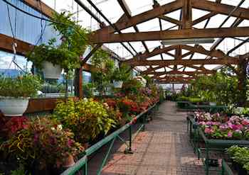 Nothing inspires spring fever quite like a trip to a greenhouse
