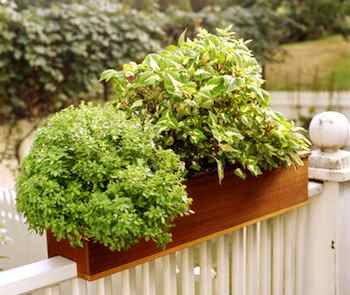 A window box adapted to a railing is ideal for creating a small-space garden on a porch or deck