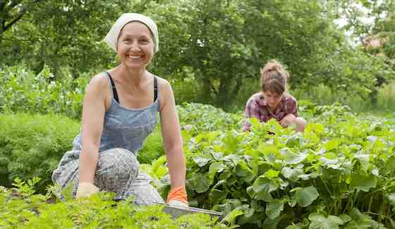 Here Comes the Sun: Don't Let Summer Heat Deter You from Gardening