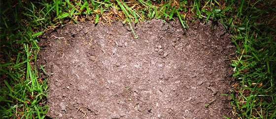 Easy Lawn Repair Tips to Get Your Yard in Shape