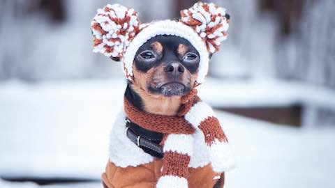 Pets | How to Prepare Your Pup for Winter