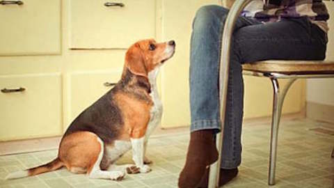 Pets | How to Stop Your Dog From Begging