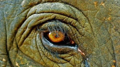 Humanity's War on Wildlife