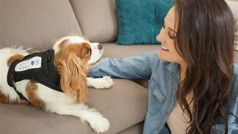 Pets | Improve Your Dog's Emotional Life
