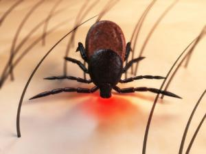 Lyme disease is the predominant tick-borne illness in the U.S. but it s not the only one. Ticks can spread other bacterial and viral diseases