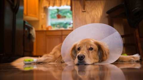 Pets | Most Expensive Dog Breeds in Medical Costs