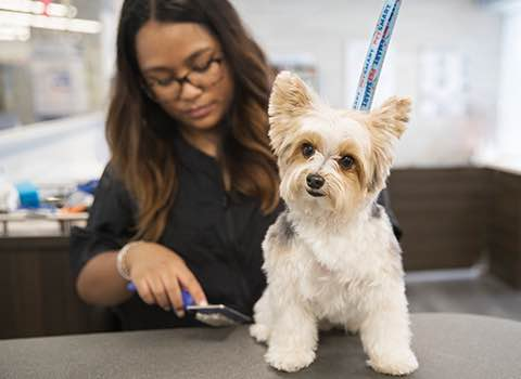 Pets | How to Prepare Pets for Grooming Visits
