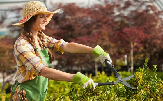 Pruning Tips for Trees and Shrubs
