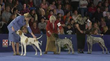 The National Dog Show, presented by Purina   iHaveNet.com