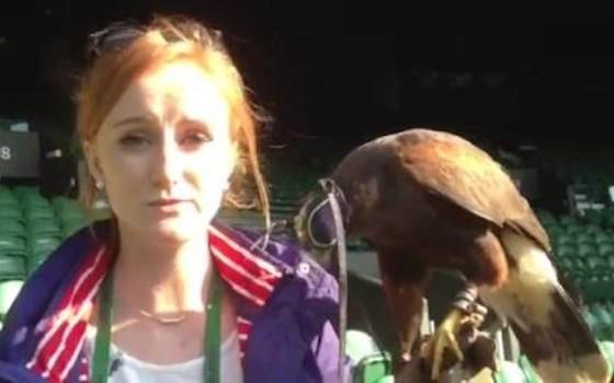 Rufus the Hawk Keeps Wimbledon Pigeon-Free