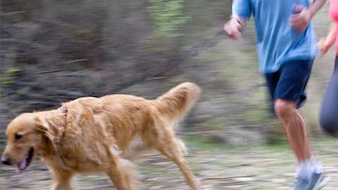 Pets | Running With Your Dog