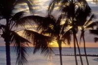 Sun sets through the palms of Waikiki Beach, Oahu