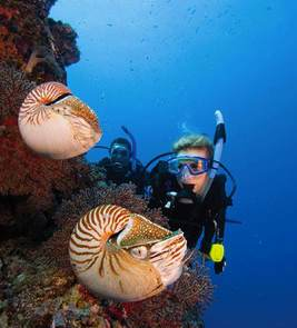 Taking the Kids: Learning to Scuba Dive