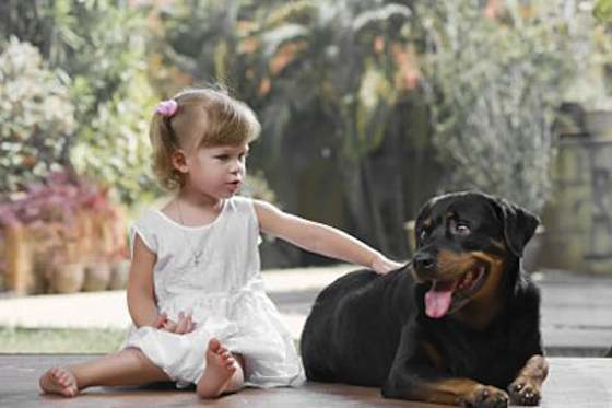 Pets | Dogs: The Rottweiler: Your Family's Best Friend