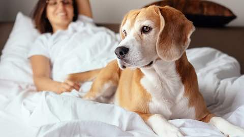 Pets   Tips for Traveling with Your Pet