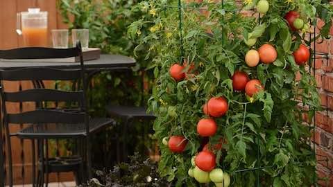 Top Trends in Vegetable Gardening