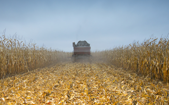 Trump's Trade Wars Hurt All of Us in Farm Country