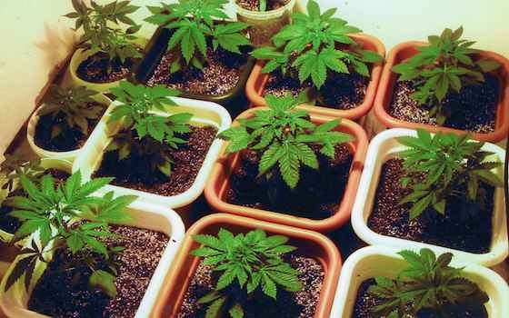 Uruguay Wrong About Not Taxing Pot