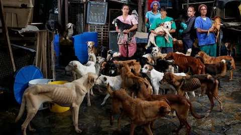 Venezuela: Dogs' Sad Life